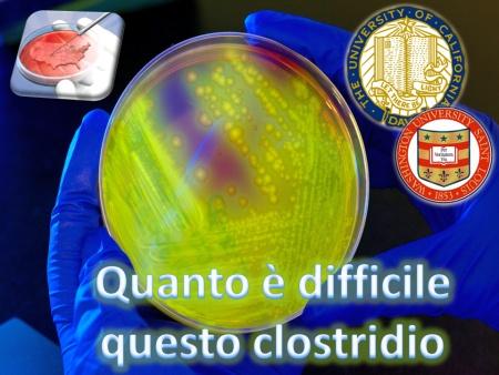 Quanto è difficile questo Clostridio…