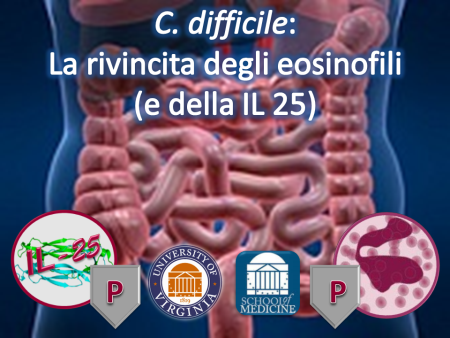 Clostridium difficile: la rivincita degli Eosinofili (e della IL-25)