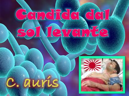 candida-auris-newmicro