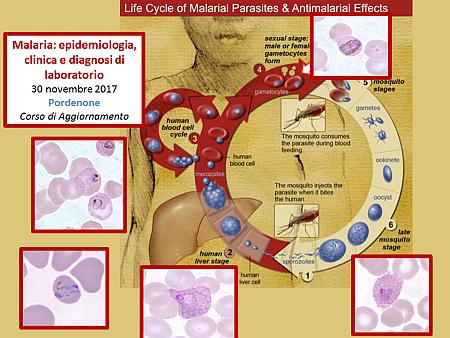 ecm-malaria-corso-camporese-nm