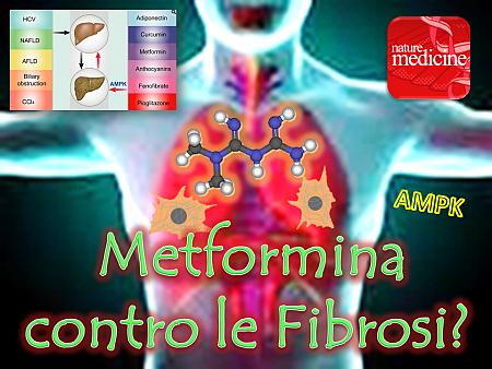 fibrosi-polmonare-mioblasti-e-metformina-nm
