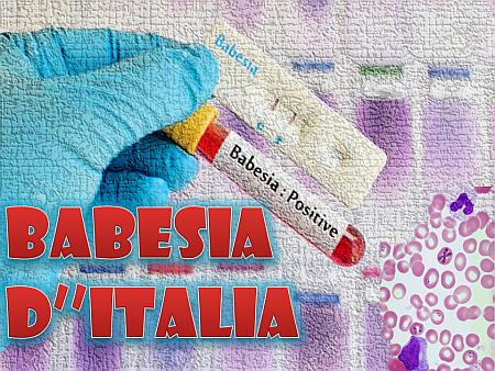 babesia-d-italia-nm