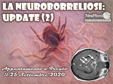 la-neuroborreliosi-update-2nm