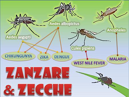 zecche-e-zanzare-nm