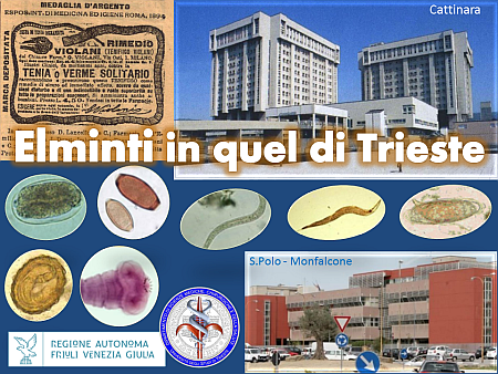 Elminti a Trieste