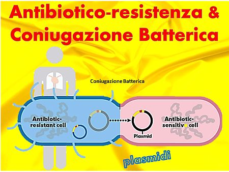 antibiotico-resistenza-coniugazione-batterica-nm